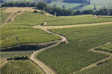 Exposition vignes paysages vignerons à Yenne avec les Guides du Patrimoine Savoie Mont Blanc